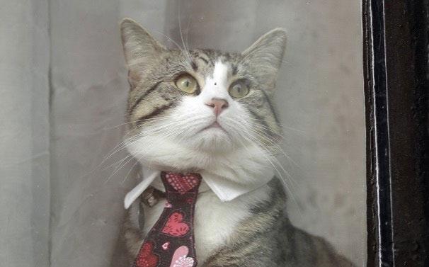 El gato de Julian Assange.