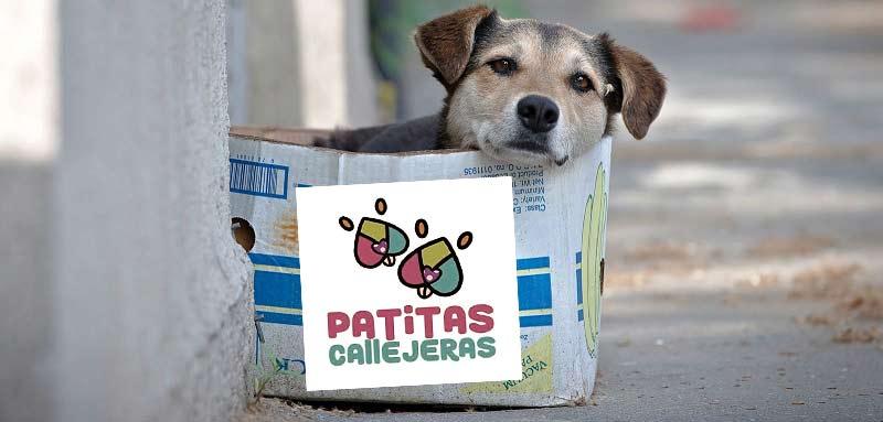 Bajo sospecha Patitas Callejeras.