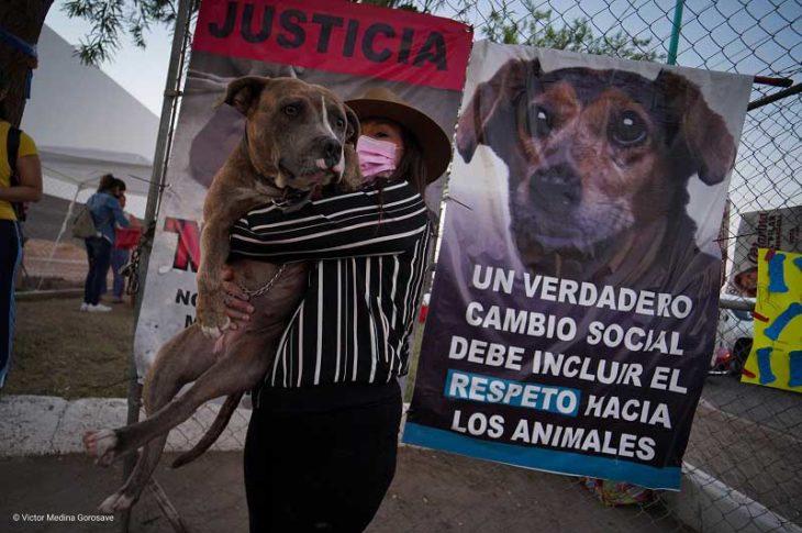 Manifestante abrazando a un perro. Foto: Víctor Medina.